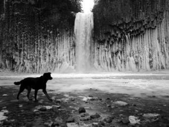 My dog Tai enjoying the falls