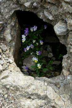 Wildflowers at Thracian Ruins