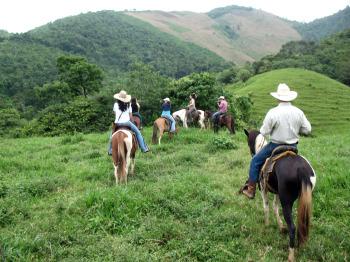 joanna_horses