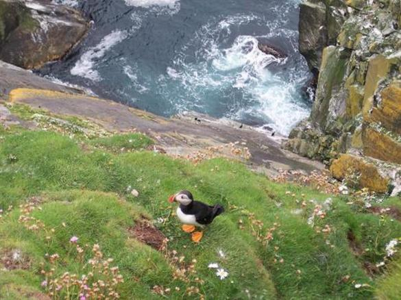 Wildlife: Sumburgh Head