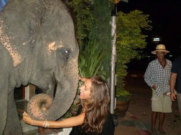 Elephant_Chang Mai