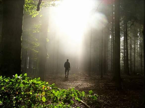 forestwalk