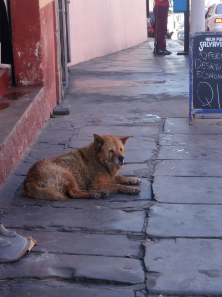 A Neighborhood Street Dog