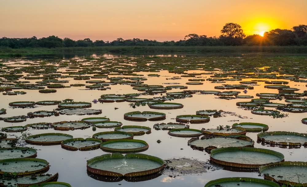 SA Pantanal