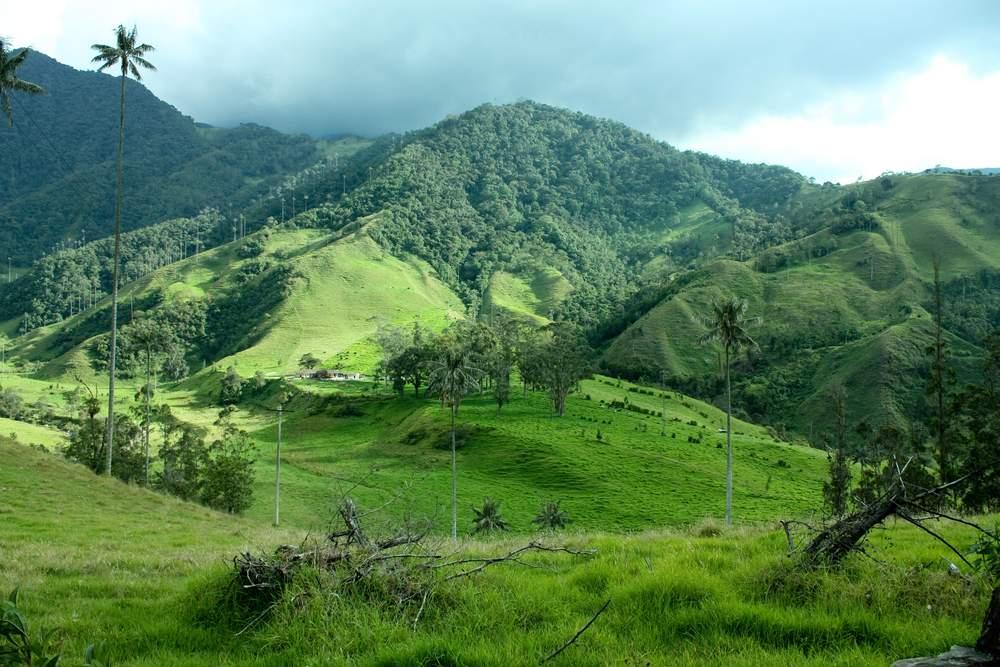 SA Valle de cocora