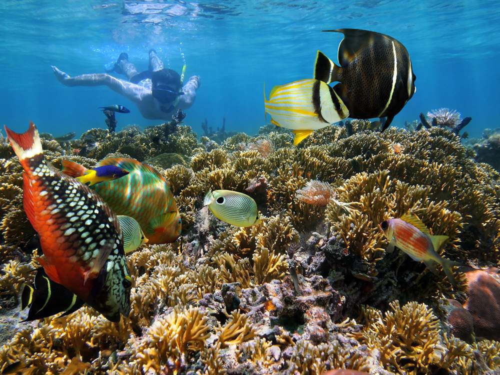 CR diving