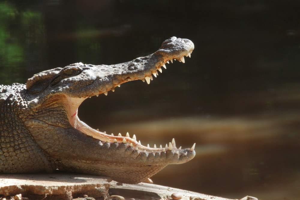 deadly-croc