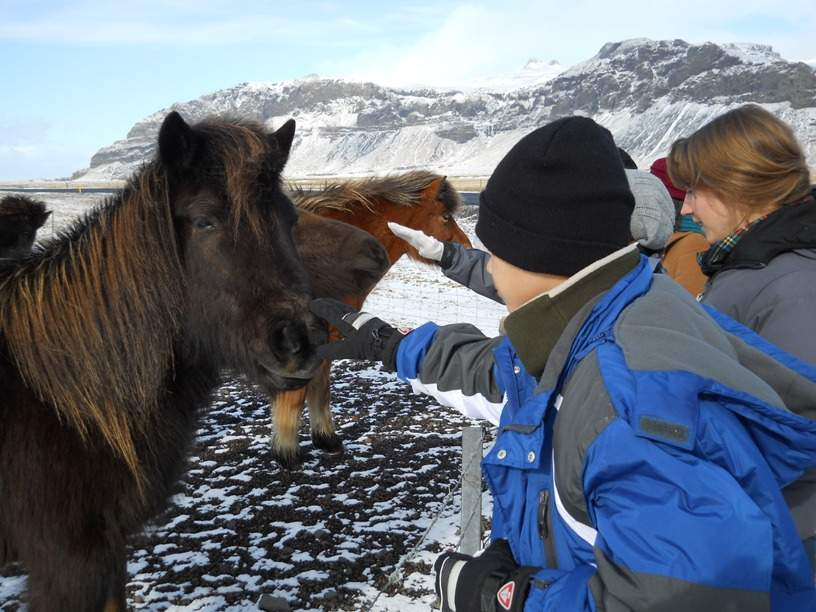 Petting Icelandic Horses on the South Shore Excursion - final