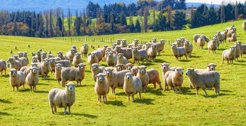 NZ0verland