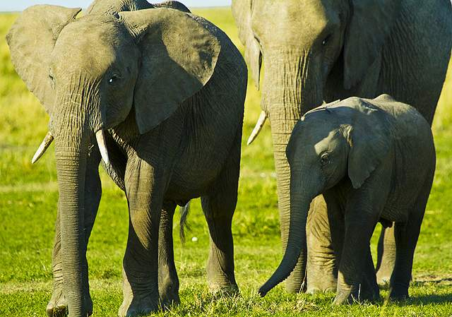 dani blanchette, kenya, africa, safari, elephants, animals, nature
