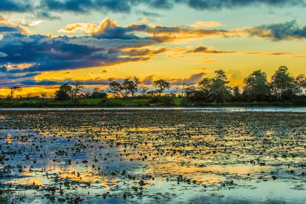 Pantanal by Filipe Frazao Shutterstock