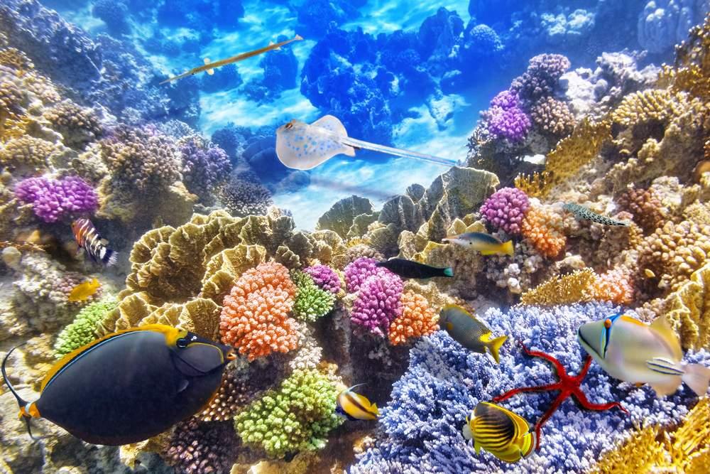 australia sea