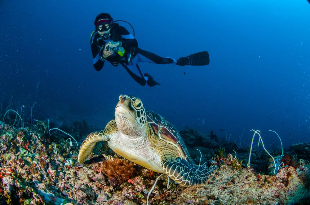 ecotourism turtle