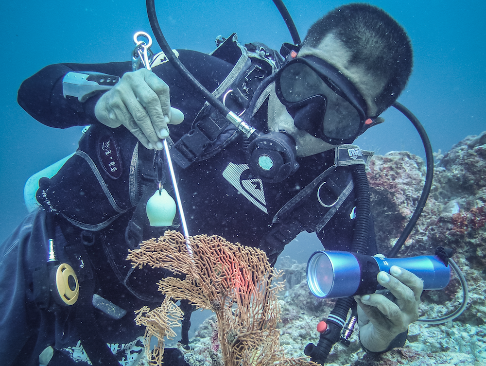 volunteer marine biology