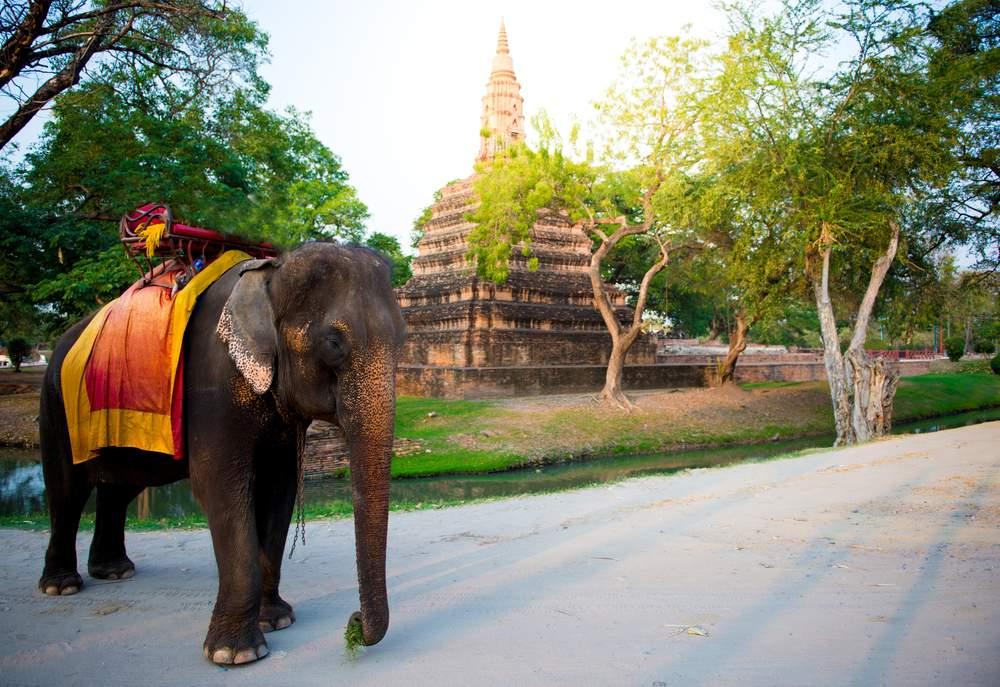 elephant wrong