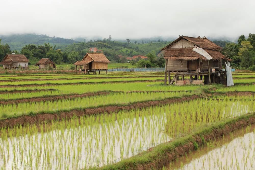 bamboo cabins northern thailand