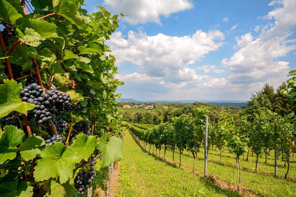 Wine regions in Southern Austria