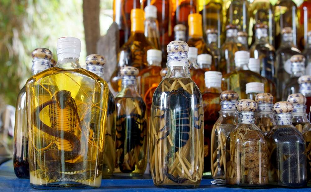 Scary snake wine from Vietnam