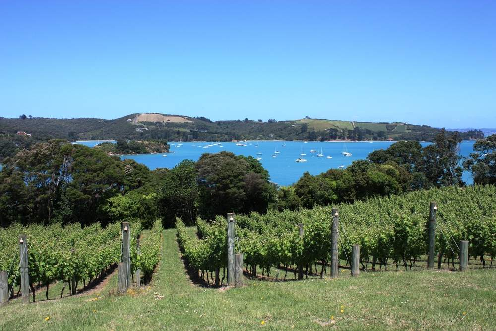 wine-tasting in New Zealand