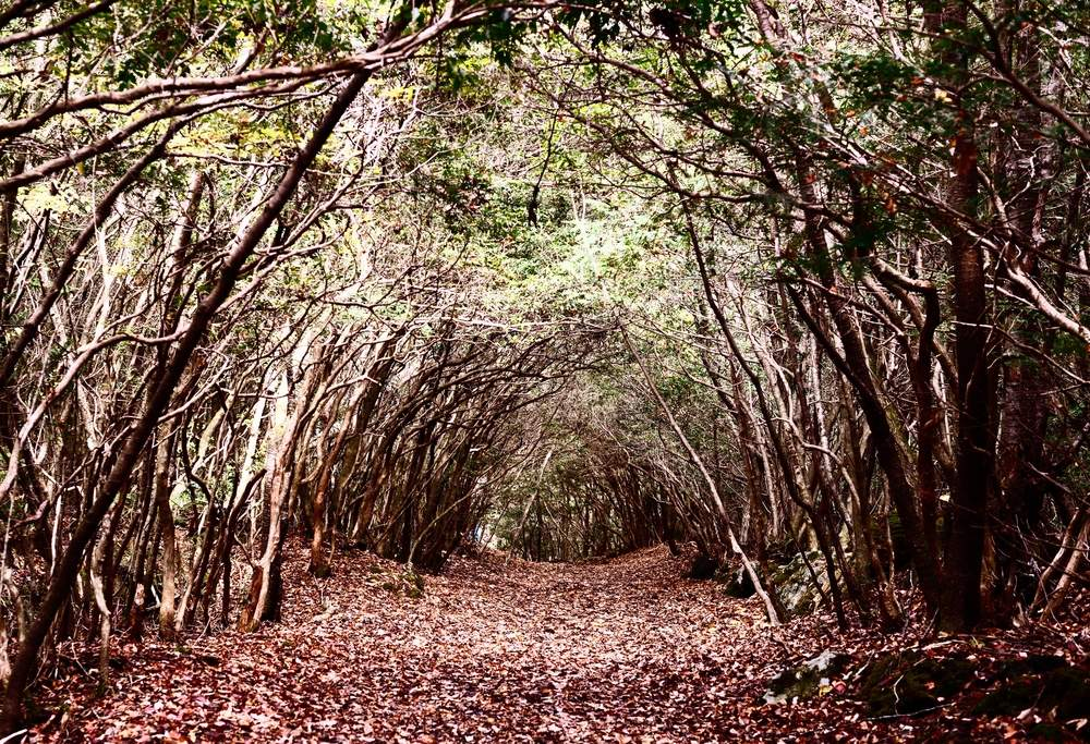 The Suicide Forest in Japan