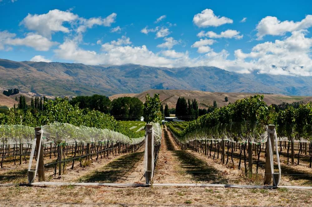 Wine Regions, New Zealand