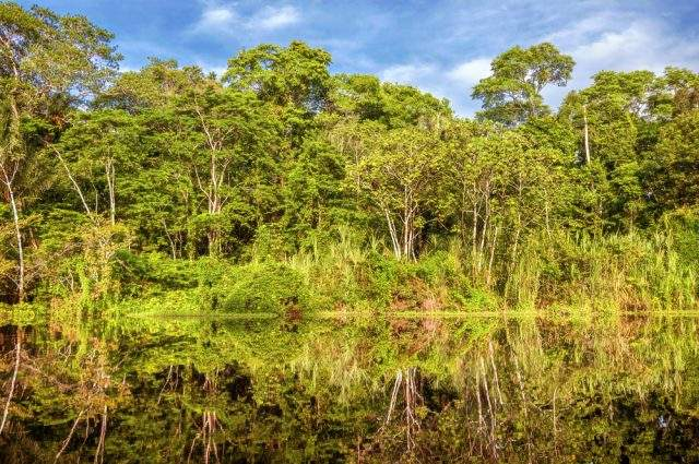Walking in the Amazon in Peru