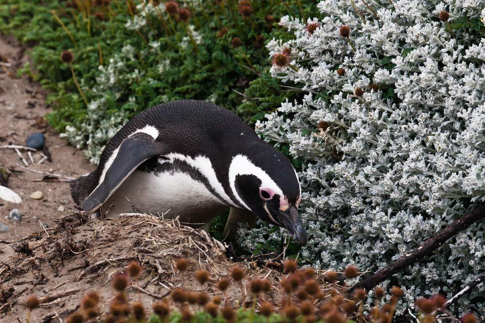 penguins and polar plants