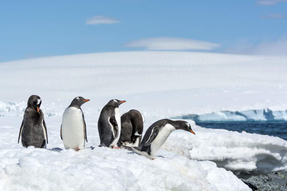 4 species of penguins live in Antarctica