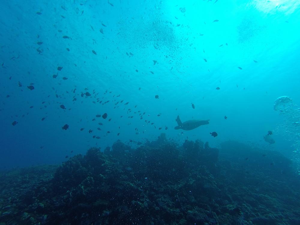 Diving at Gili Islands by Flickr/Francesco