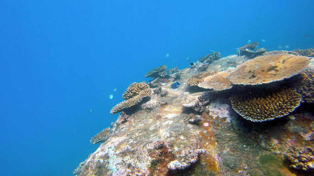 Sri Lanka Coral Reef by Flickr/Artur Kuliński
