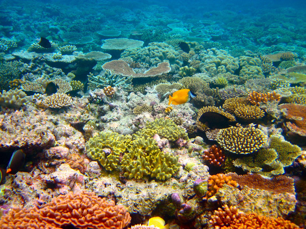 The Great Barrier Reef by Flickr/Kyle-Taylor