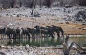 Namibia: Windhoek-Etosha-Swakopmund-Sossuvlei – Africa