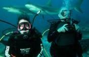 Shark Diving in the Bahamas – Nassau, Bahamas
