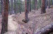 The Rockerville Flume Trail – South Dakota, USA