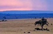 Magnificent Vista and Wildlife – Kenya,  Africa
