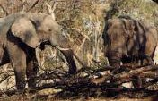 Chobe Game Reserve, Botswana – Africa Game Reserves Travel Guide …