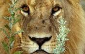 Linyanti Wildlife Reserve, Botswana
