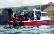 Dolphins Dig Dylan – South Island