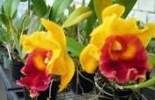 Orquideario – Cuenca, Ecuador, South America