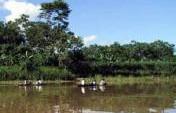 It Happened One Night – Northern Amazon, Brazil