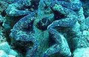Giant Clams, Giant Statement – Camiguin Island, Philippines, Asia