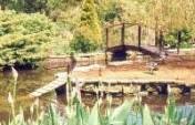 Dorset Duck Pond – Frampton, England