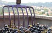 Six Places in Europe You've Never Thought of to Go Wine Tasting