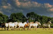 8 Top Travel Experiences for Horse Lovers