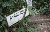 Ayahuasca Healing Journey – Into the Amazon