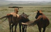 Mongolia for Beginners – Much More Than Expected