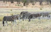 Cheap Safari Tips: DIY at South Africa's Kruger National Park