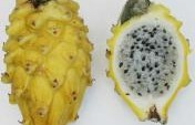 15 Latin American Fruits to Surprise your Palate