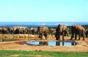 How to Choose a South Africa Safari
