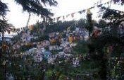 Beware of Dogs: Mcleod Ganj, Northern India